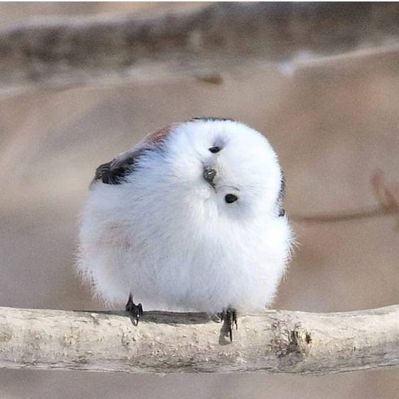 https://www.toocutetobear.com/wp-content/uploads/2020/04/beautiful-baby-bird.jpg